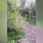 Վիրուսը «կանխելու» նոր միջոց. Գեղարդի վանքի տարածքում ծառերին դիմակներ են կապել